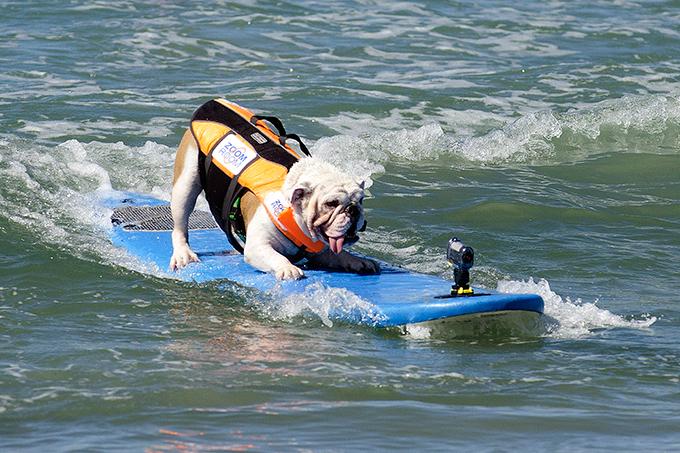 Четвероногие виртуозы серфинга