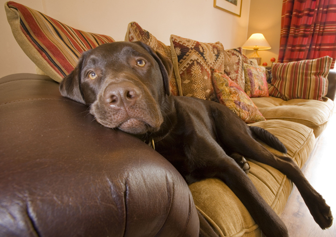 Десять самых умных собак. Поспорим?