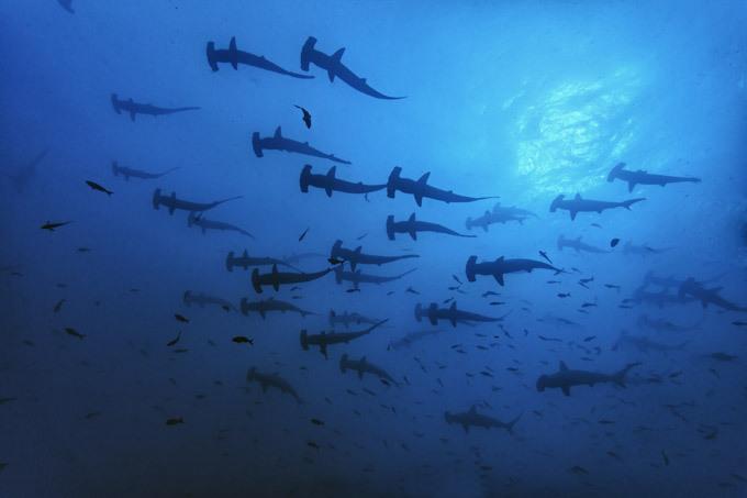 Краски подводного царства