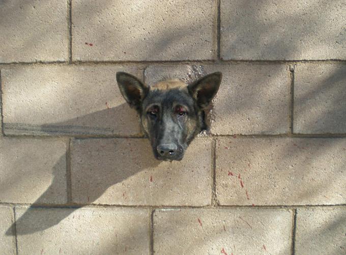 Истории из жизни животных: пес в стене