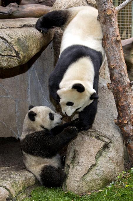 Зоопарки мира: Очень необычные