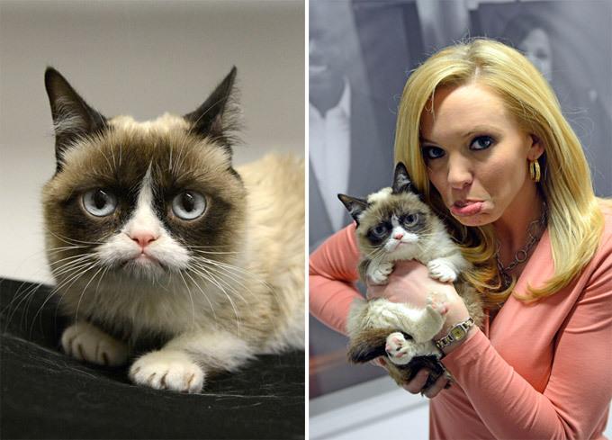Карликовая кошка. Истории из жизни кошек