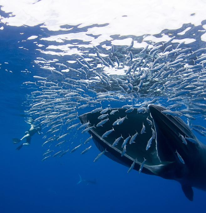 картинки как киты едят ознакомимся каждым этих