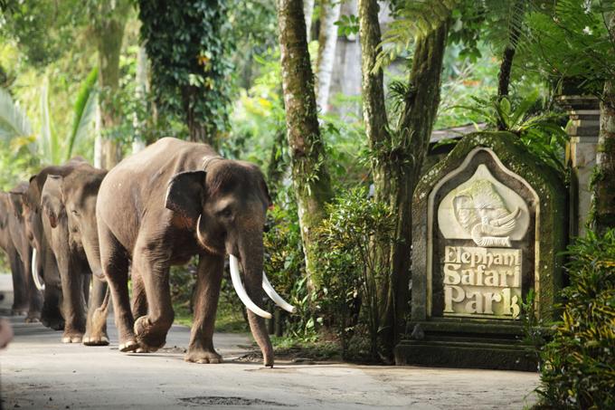 Отдых со слонами