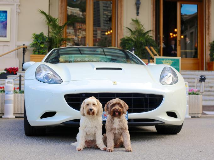 Sotheby's и Ferrari устроят крупнейшую распродажу