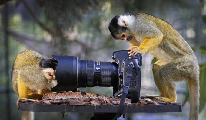 Что бывает, когда звери берут в лапы фотоаппарат