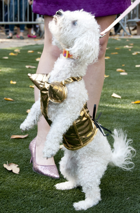 Хэллоуин по-собачьи