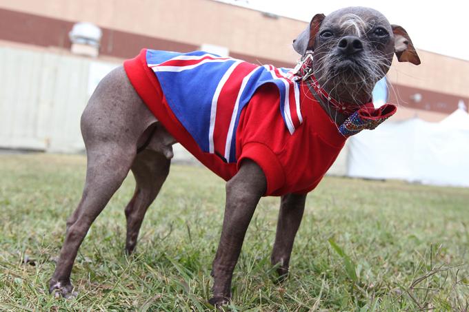 Самый уродливый пес в мире