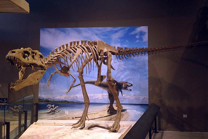 Ученые обнаружили дедушку тираннозавра