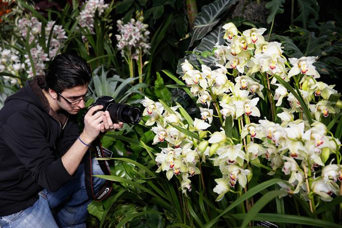 Орхидеи: бесценные, загадочные и прихотливые