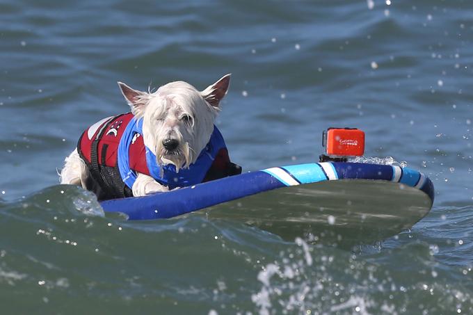 Соленые псы: от мокрого щенка до морского волка