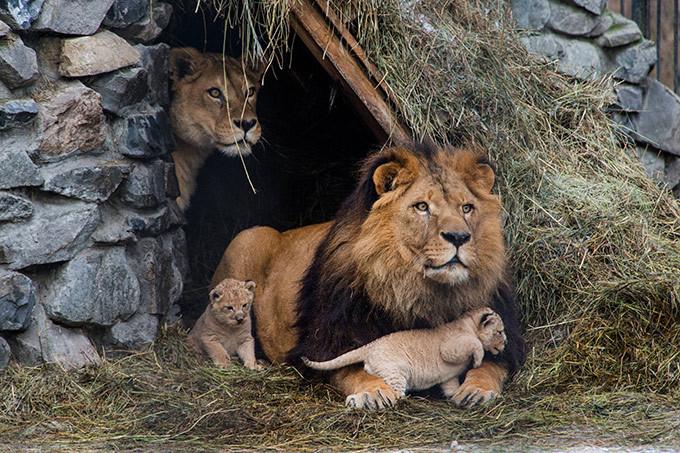 Горести и радости зоопарков мира