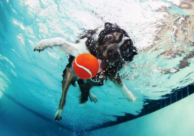 картинки с пловцами в бассейне прикольные украинцев выбирают именно