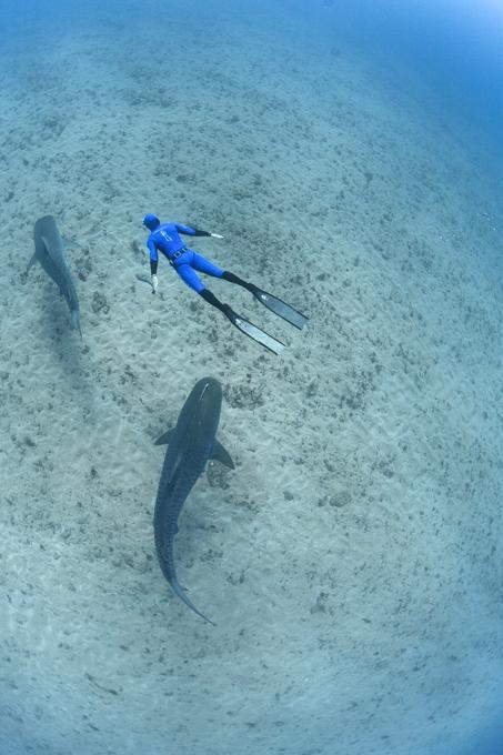 В царстве акул