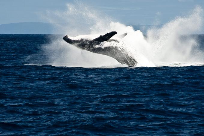 Хозяин океана