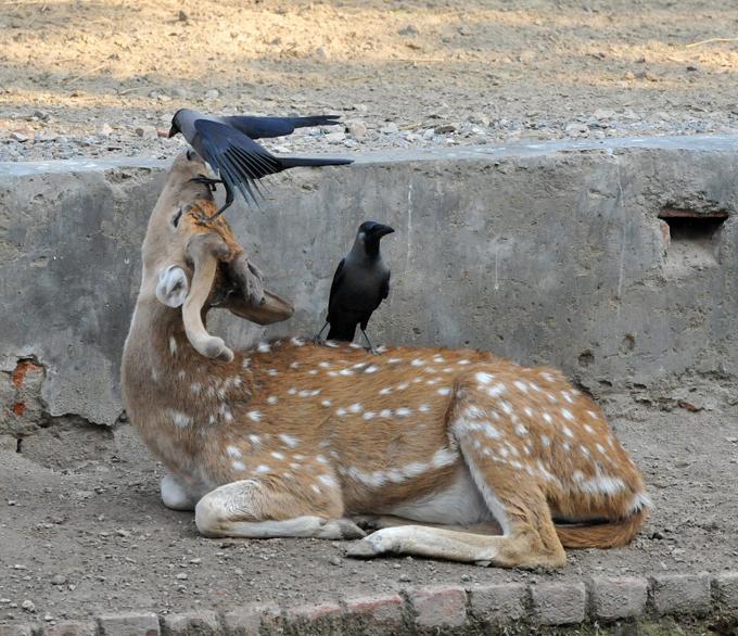 Птицы командуют парадом