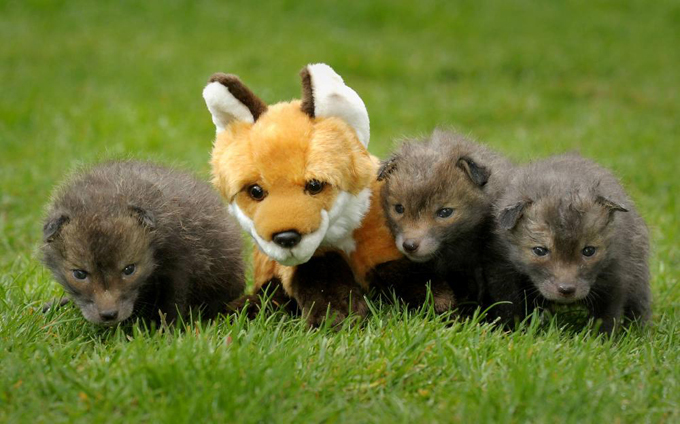 Удивительный мир животных