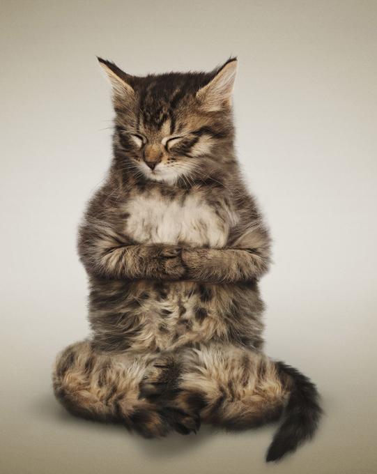 Международный день йоги: Мордашки и лапки