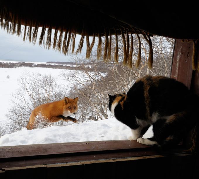 На страже хозяйской собственности