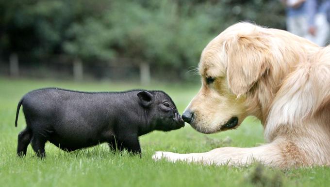Картинки с новым годом собака и свинья, открытки мерцающие