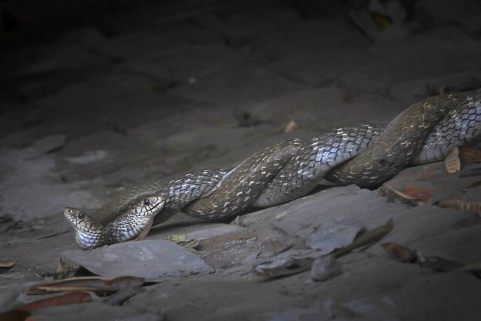 брачный период змей картинки событий