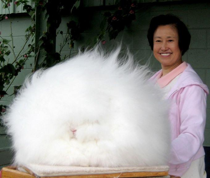 Ушастые интернет-сенсации: самый волосатый