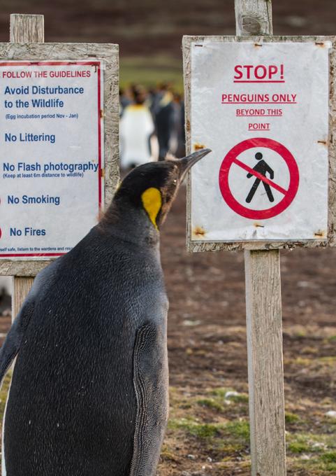 Грамотный пингвин. Лови момент, или Хищники и их друзья
