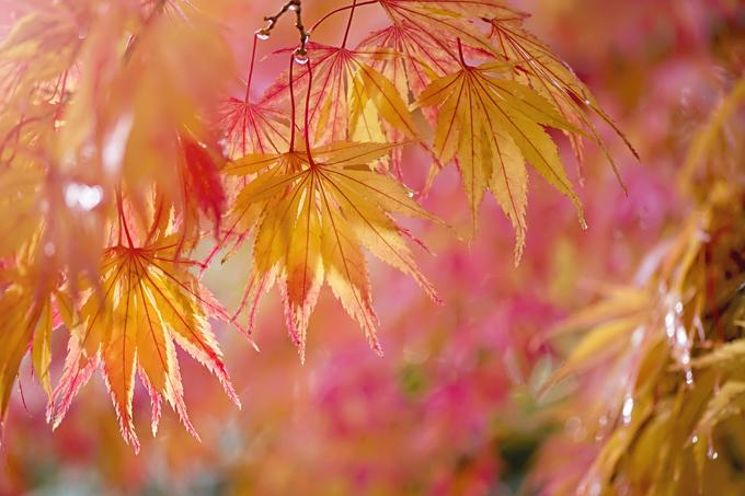 Прощание с осенью