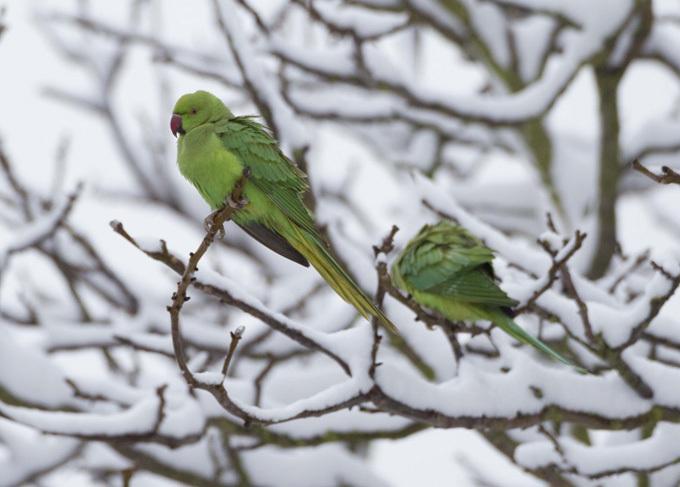 Зеленые тираны