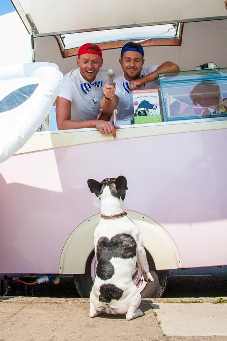 Собака выпрашивает мороженое. Мороженое для собак