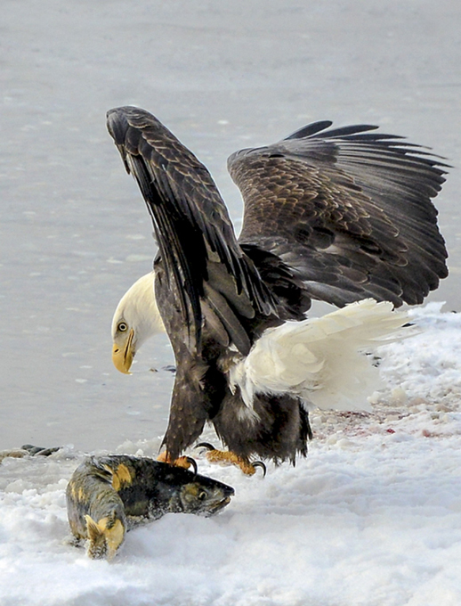 В мире дикой природы