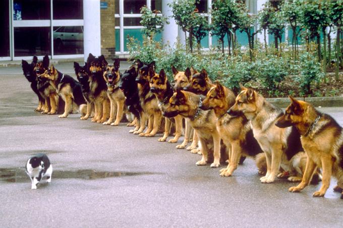 Как кошка с собакой... Кот на военной службе