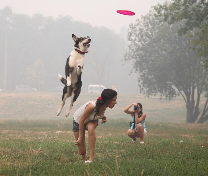 Спортивной собаке – спортивного хозяина