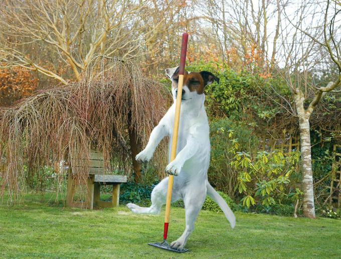 Собачья жизнь: Трудовые будни на даче-огороде