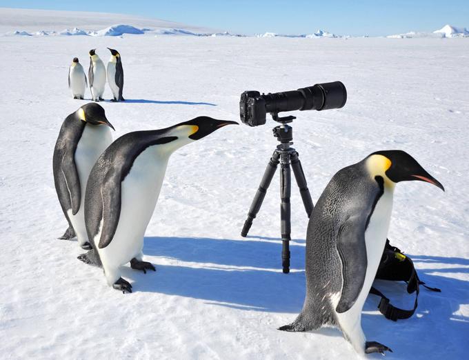 Забавные зверюшки: пингвины-натуралисты