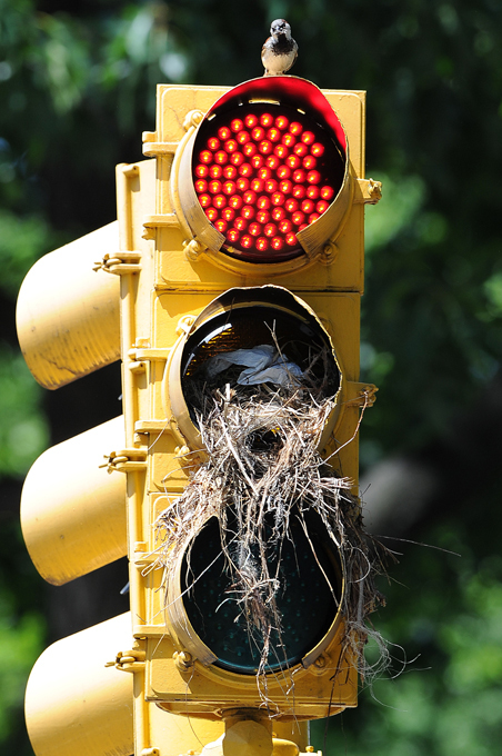 Сказка-быль про птичку, светофор и яичко