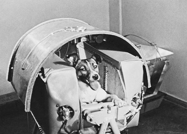 55 лет полету Лайки в космос