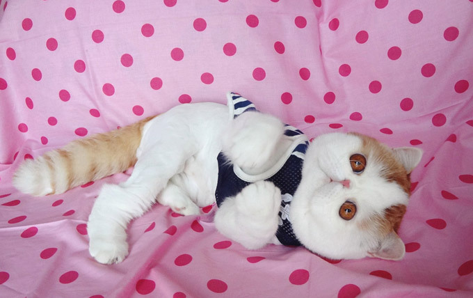Самая популярная кошка в мире