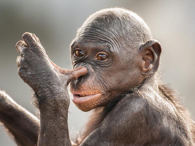 любителям очень удивленные животные фото праздником, родная, пусть