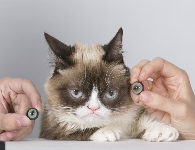 Интересное в мире: Кот в Музее Мадам Тюссо