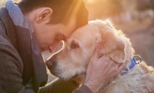 Пять причин исключить диабет у вашей собаки