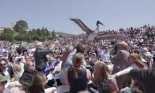 Выпускной в университете США чуть не сорвали пеликаны