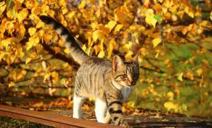Осенние опасности для домашних питомцев