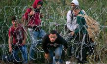 Дрожание европейских овец перед арабскими волками