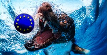 Елена Гуськова: Приспешники ЕС вспомнят о России, когда им будет выгодно