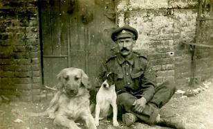 Собаки на фронтах Первой Мировой Войны