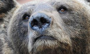 """""""Выжившая"""": сноубордистка не заметила гнавшегося за ней медведя. ВИДЕО"""