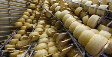 Валаамские монахи освоили производство элитных итальянских сыров