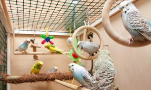 Десять вещей, которые нужно знать, прежде чем заводить птицу. Часть 2