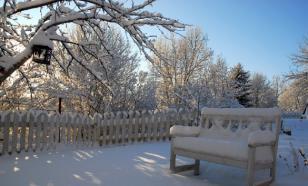 """Эксперт: как избежать """"экстремизма садовода"""" и сохранить посадки зимой"""